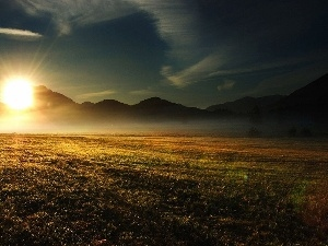 Fog, sun, Meadow