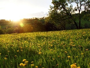 sun, grass, Meadow, Flowers