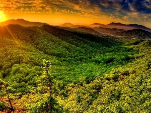 sun, rays, Mountains, summer, forest