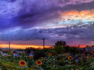 sun, west, clouds, Nice sunflowers, Houses