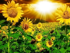 sun, rays, Nice sunflowers, Mountains