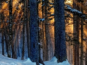 sun, rays, winter, forest