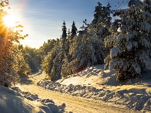 sun, rays, Way, winter, forest