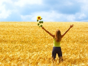 Sunflower, girl, Field, corn