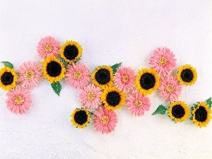 Nice sunflowers, gerberas