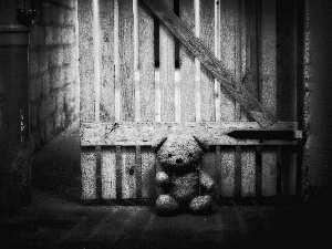 basement, teddy bear