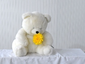 teddy bear, Flower, White