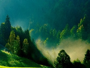 The Hills, green ones, Morning, Fog