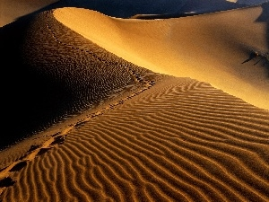 traces, Africa, Desert, Namibia