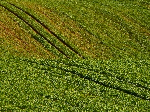 traces, tractor, Field