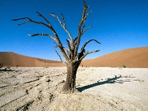 trees, Desert, dry, Africa, Ascension, Areas