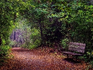 autumn, trees, Leaf, forest, viewes, Way, Bench