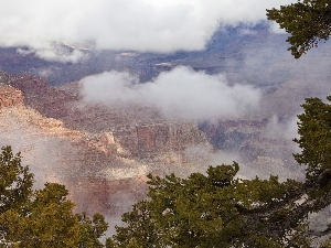 trees, branch pics, canyon, clouds