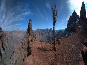 trees, canyons