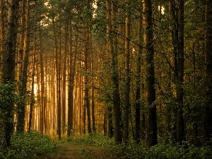 Way, viewes, forest, forest, light breaking through sky, trees