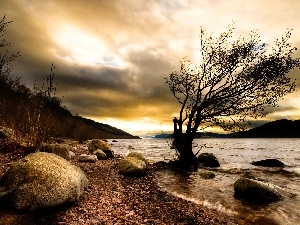 trees, coast, River, Stones