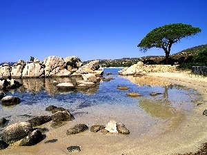 trees, coast, sea, rocks