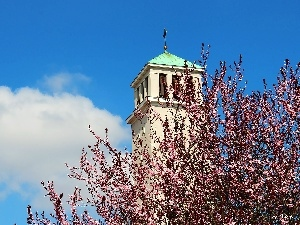 trees, flourishing, tower, Church