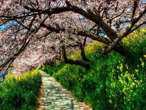 trees, flourishing, Spring, VEGETATION, Path