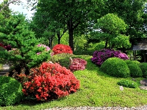 trees, flourishing, Bush, Garden, viewes, beatyfull
