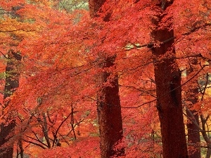 trees, color, forest, viewes, autumn
