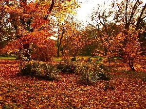 trees, color, Leaf, Garden, viewes, autumn