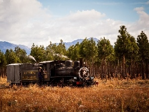 trees, forest, locomotive, viewes, Mountains