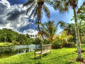 trees, Bench, Palms, viewes, River