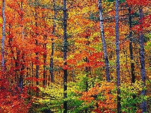 trees, forest, warm, viewes, colors