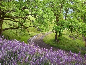 trees, lupine, Way, viewes, Violet