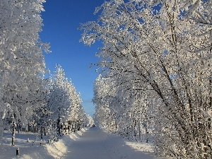 trees, frosty, winter, viewes, Way