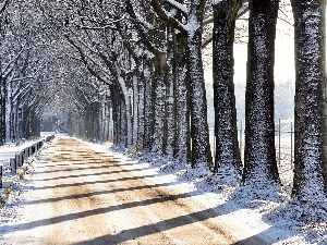 trees, hedge, winter, Way