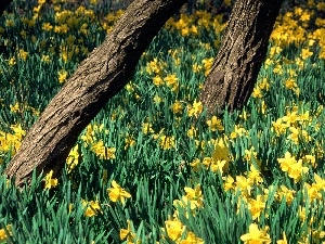 trees, Stems, Yellow, Daffodils