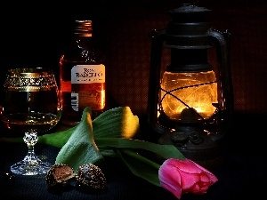 tulip, Lamp, composition, alcohol