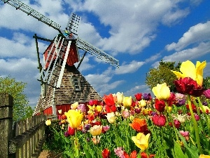 Tulips, Field, Windmill, Fance