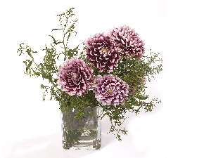 Vase, dahlias, purple, White
