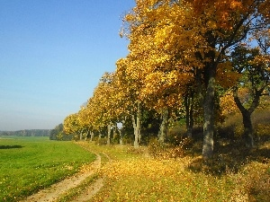 viewes, trees, Field, autumn, Way
