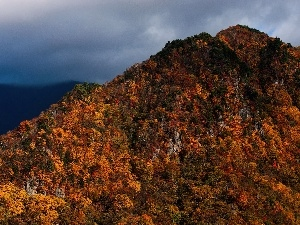 viewes, trees, mountains, autumn, color