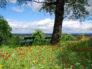 viewes, trees, Meadow, bench, Flowers