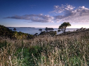 viewes, Islands, trees, Coast, clouds, grass