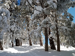 viewes, trees, winter, Conifers, Snowy