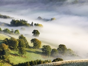 viewes, trees, field, Fog