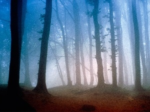 viewes, trees, forest, Fog, Petite