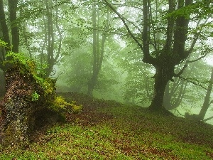 viewes, trees, forest, Fog