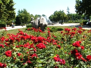 viewes, trees, Park, fountain, roses