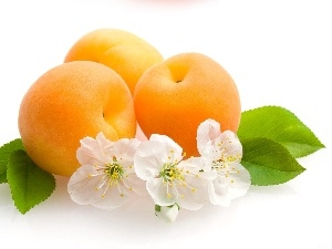 viewes, trees, apricots, fruit, Flowers