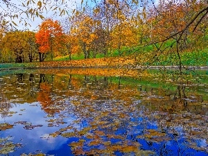 Leaf, viewes, Pond - car, Park, autumn, trees