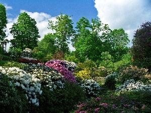 Flowers, rhododendron, Park