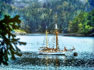 viewes, trees, Gulf, sailing vessel