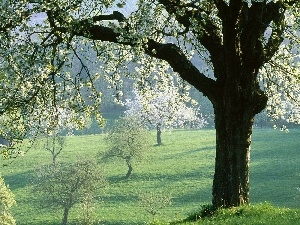 viewes, trees, field, Spring, flourishing